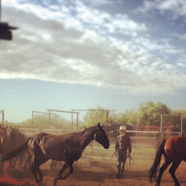 Catching #horses this #morning before we pack up the #mountain. #greatoutdoors #travelnevada #gowest