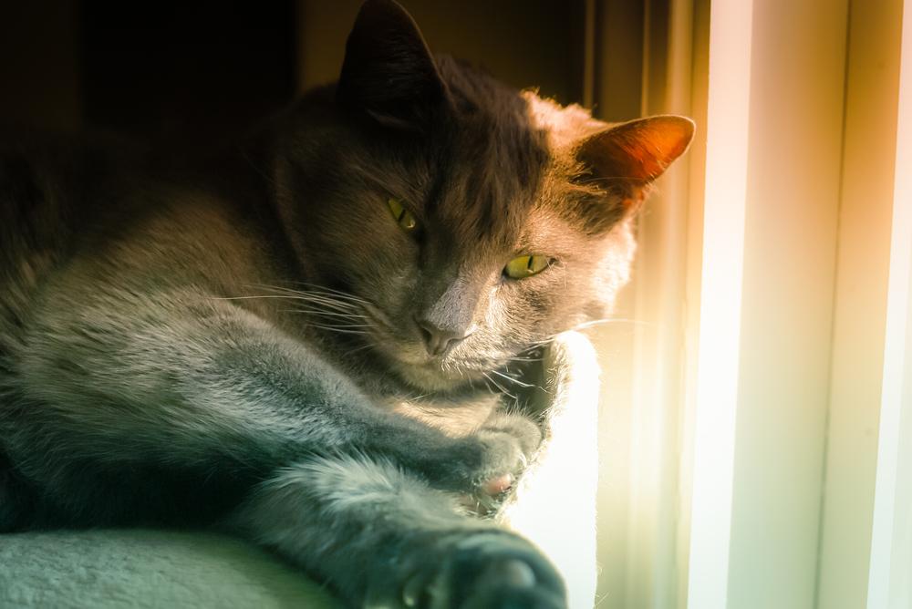 Smokey In The Perch, Sun...