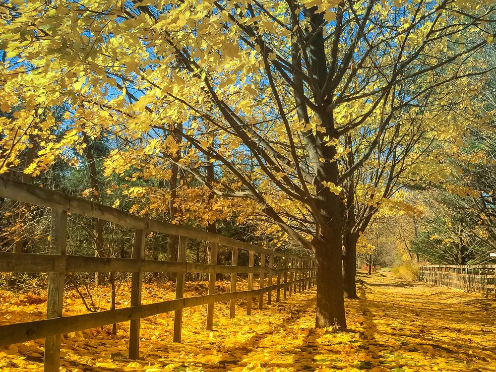 Fall 2014 (1 of 1)-3.jpg