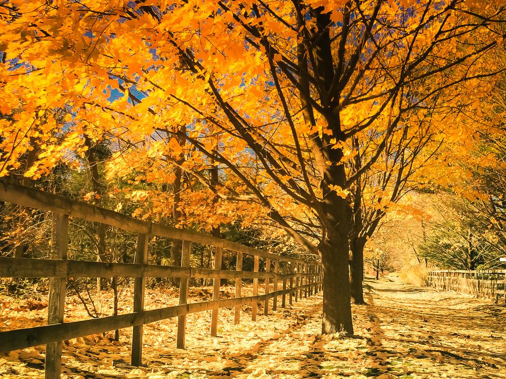 Fall 2014 (1 of 1)-4.jpg