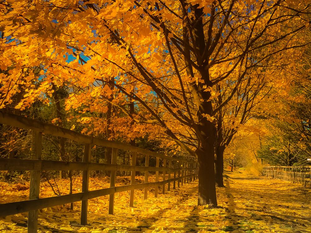 Fall 2014 (1 of 1)-5.jpg