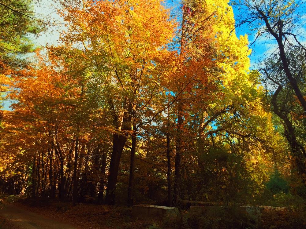 Nepaug Forest CT
