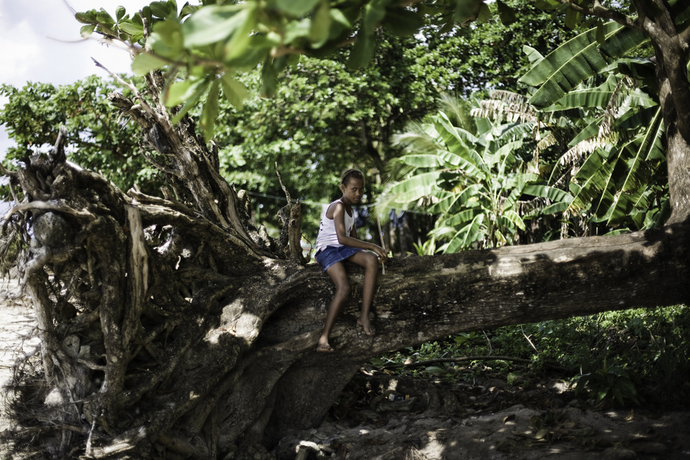 tree nicaragua