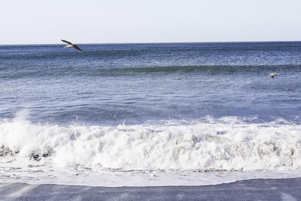 pelicans nicaragua