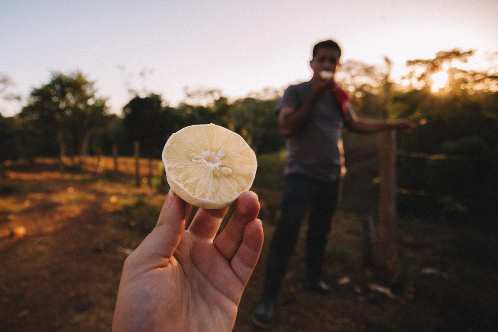 Everyday you learn something new - it' not an orange. It's 'lemon dulce' (sweet lemon)