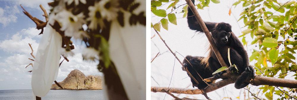 Aqua Nicaragua howler Monkey