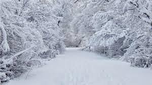 snowy%2Btrees%2Bfor%2Bshala%2Bblog.jpg