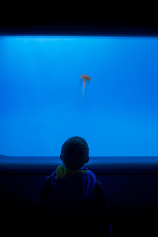aquarium-12.jpg