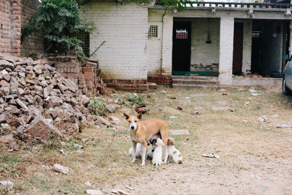 india-97.jpg