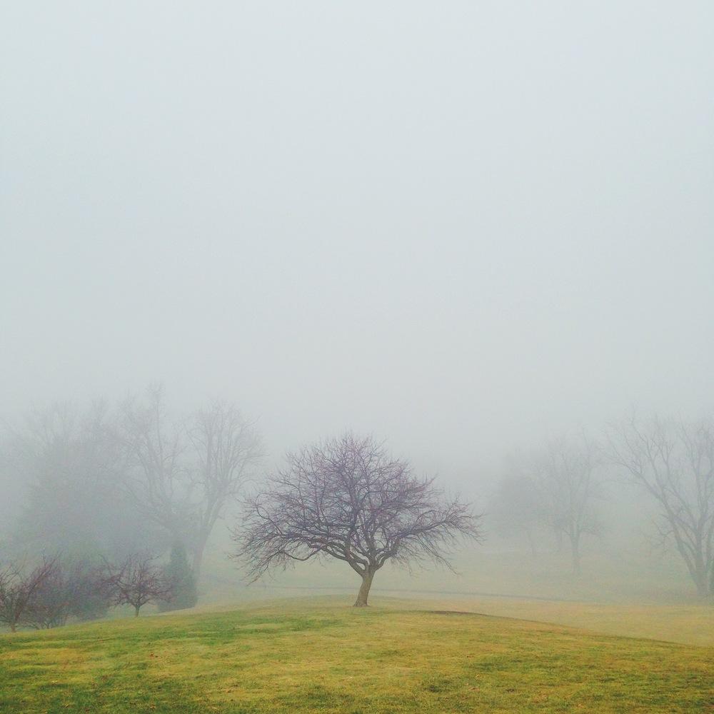 EmanuelVargas19-Trees.jpg