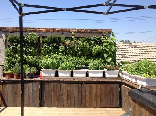 Our aquaponic system on the rooftop.