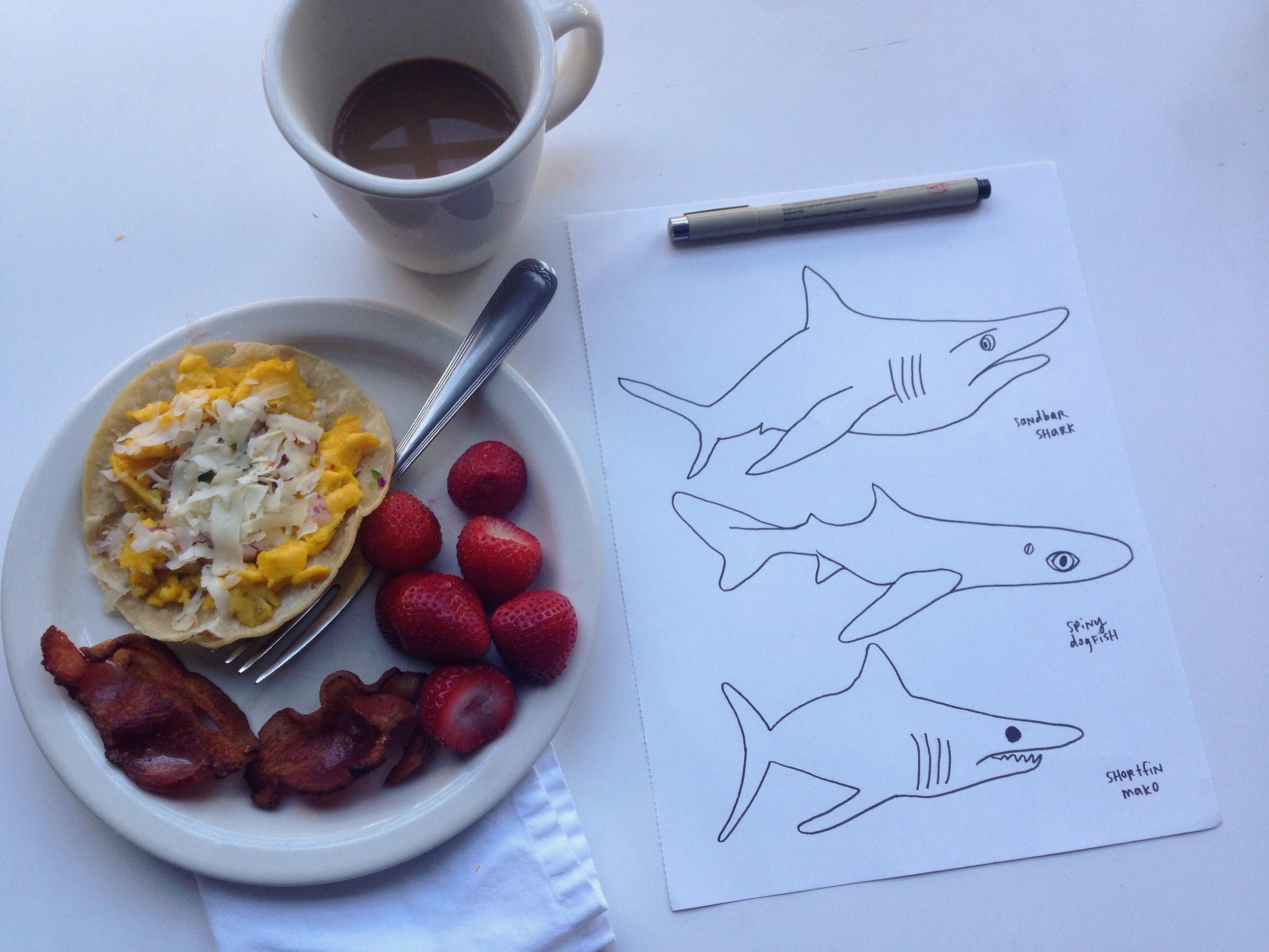 sharks | year of creative habits