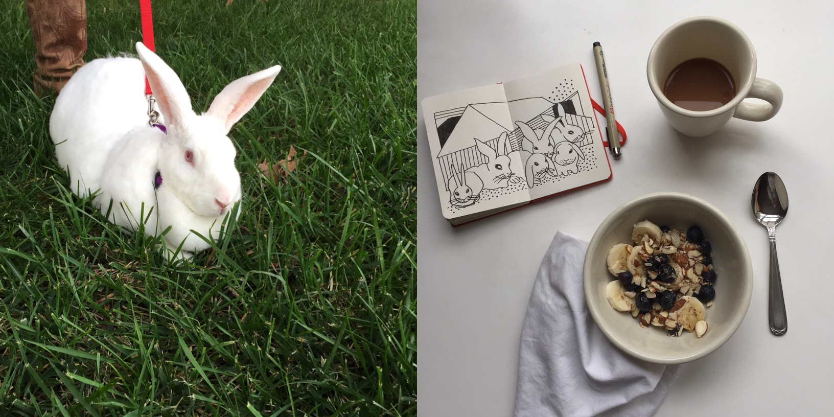 bunnies | year of creative habits