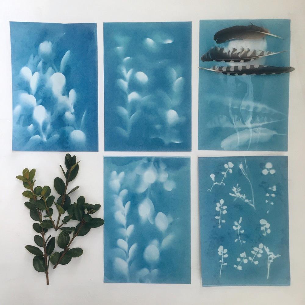 crystal moody | cyanotypes (sun prints)
