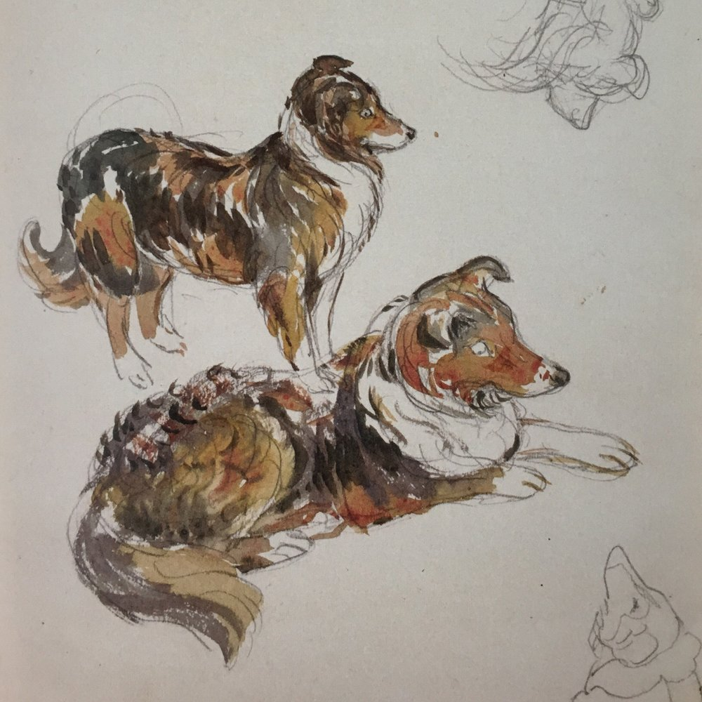 studies of Kep the collie from The Tale of Jemima Puddle-Duck