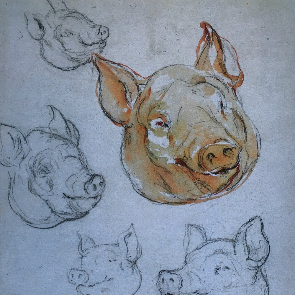 Pig sketches for The Tale of Pigling Bland