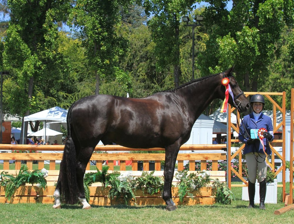 Jackie and Brave were Reserve Champion at Menlo Charity Horse Show