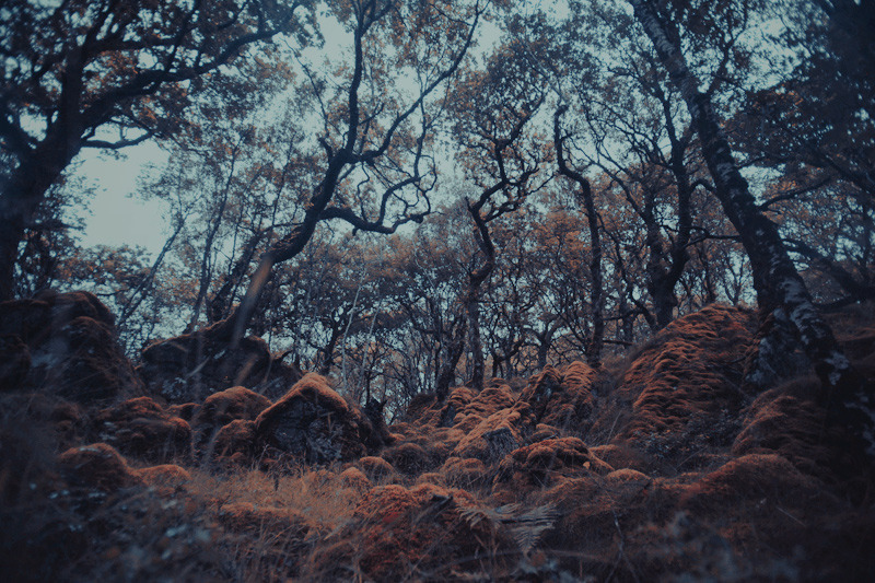 sunart_trees_maxime_chillemi_07_800.jpg