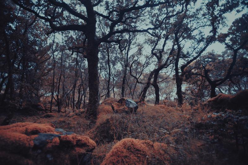 sunart_trees_maxime_chillemi_01_800.jpg