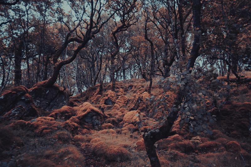 sunart_trees_maxime_chillemi_05_800.jpg