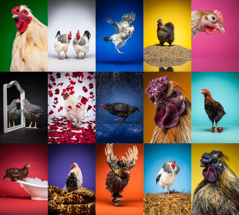 happy eggs grid.jpg