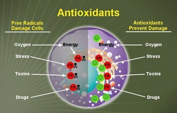 E-Antioxidants