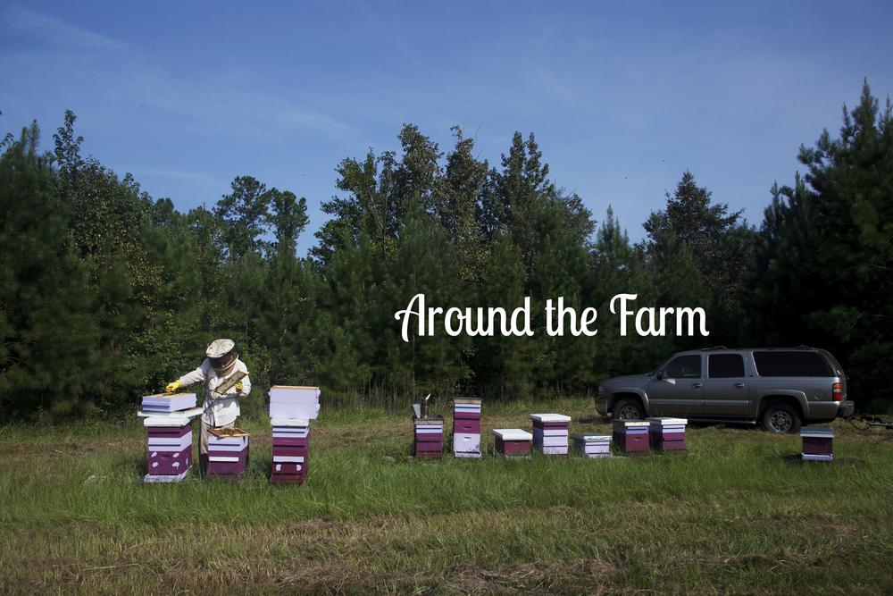 aroundthefarm.jpg