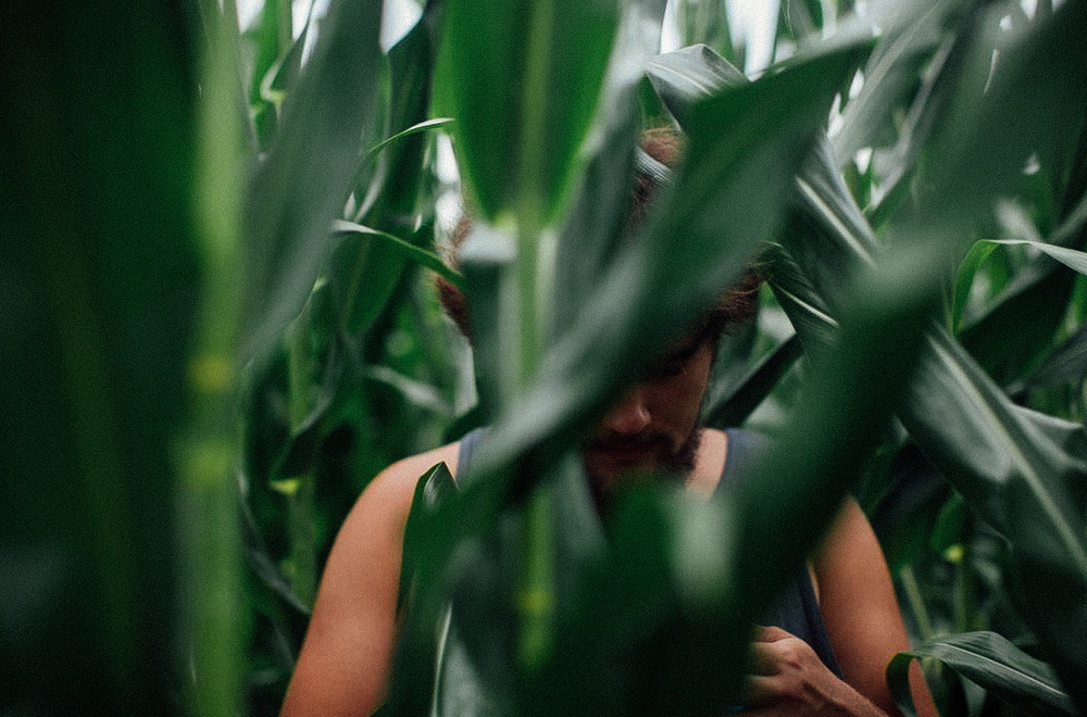 Derrick peaking through the corn stalks.
