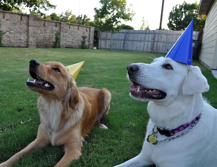 dogs-birthday.jpg