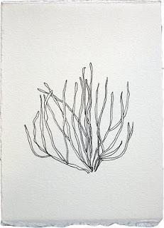 """Coral,"" Sonomi Kobayashi"