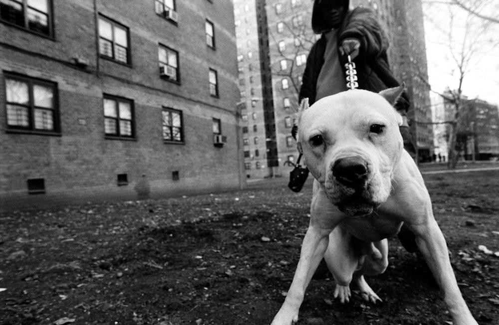 Bushwick, Brooklyn, 2005© Boogie