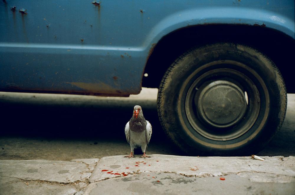Untitled (Bleeding pigeon, NYC), 1993 (from Sidewalk) © Jeff Mermelstein