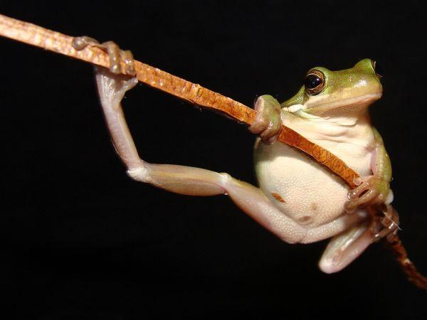 RuleofThirds_Frog