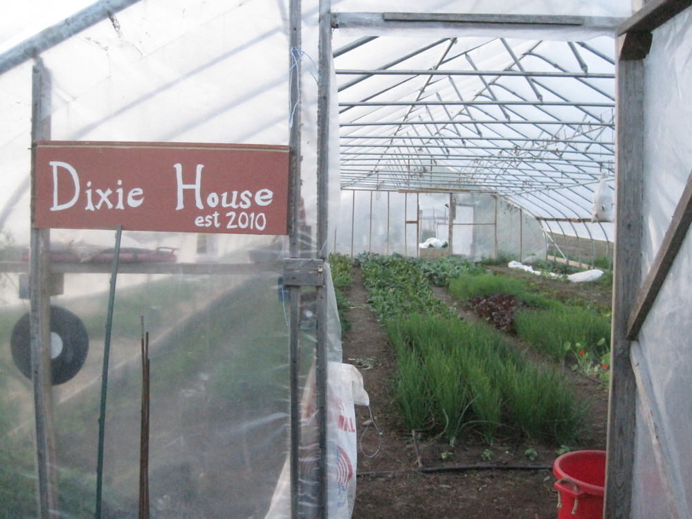 The view into our south hoop house.