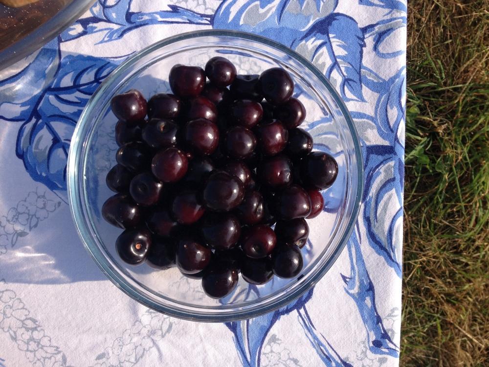 Sweet Cherries are Here!