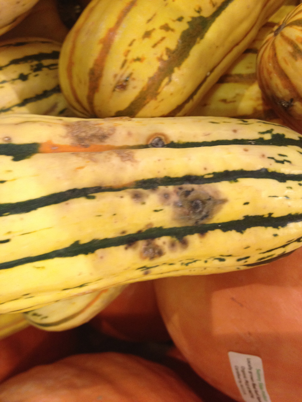 Watch out for bruised spots like this. But if your aged squash has 'em, just cut around it.