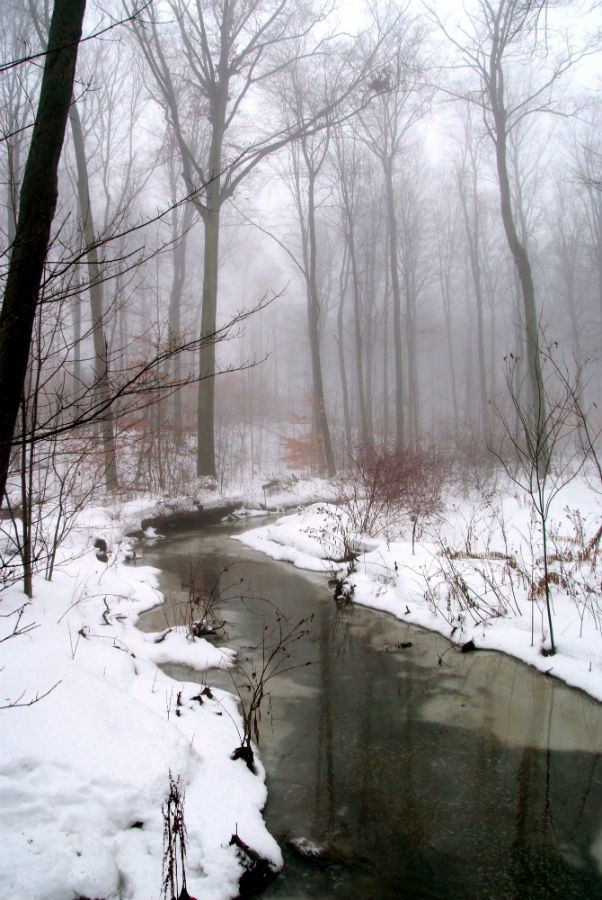 Winter fog - Monarch Woods