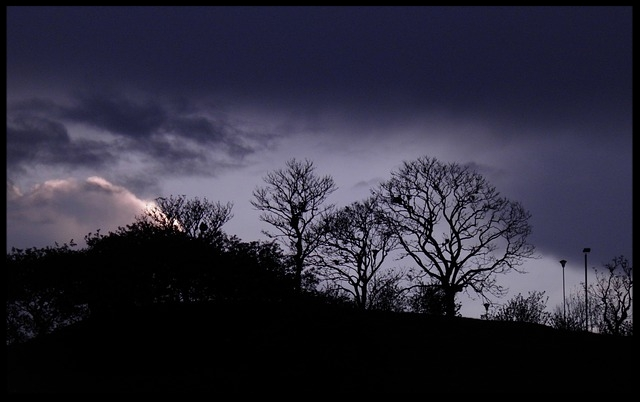 landscape-1043965_640.jpg