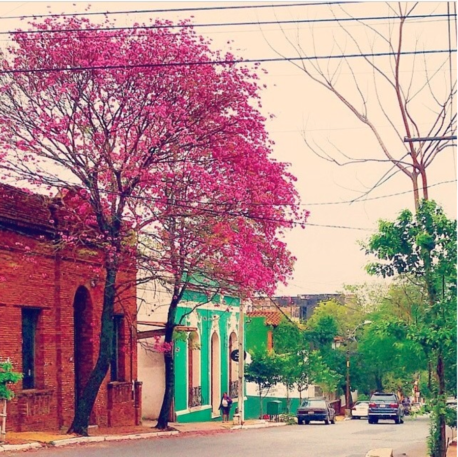 Instaasuncion(curated).png