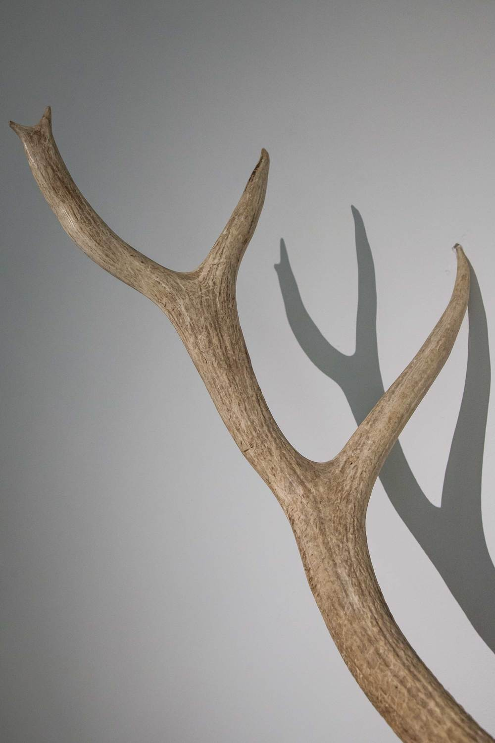 Other_antler.jpg