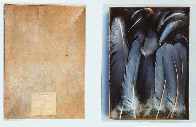 Dianne Kornberg,  Feathers of Great Blue Heron  (1993, Cibachrome print, 40 x 64 inches), DK.9.1-.2