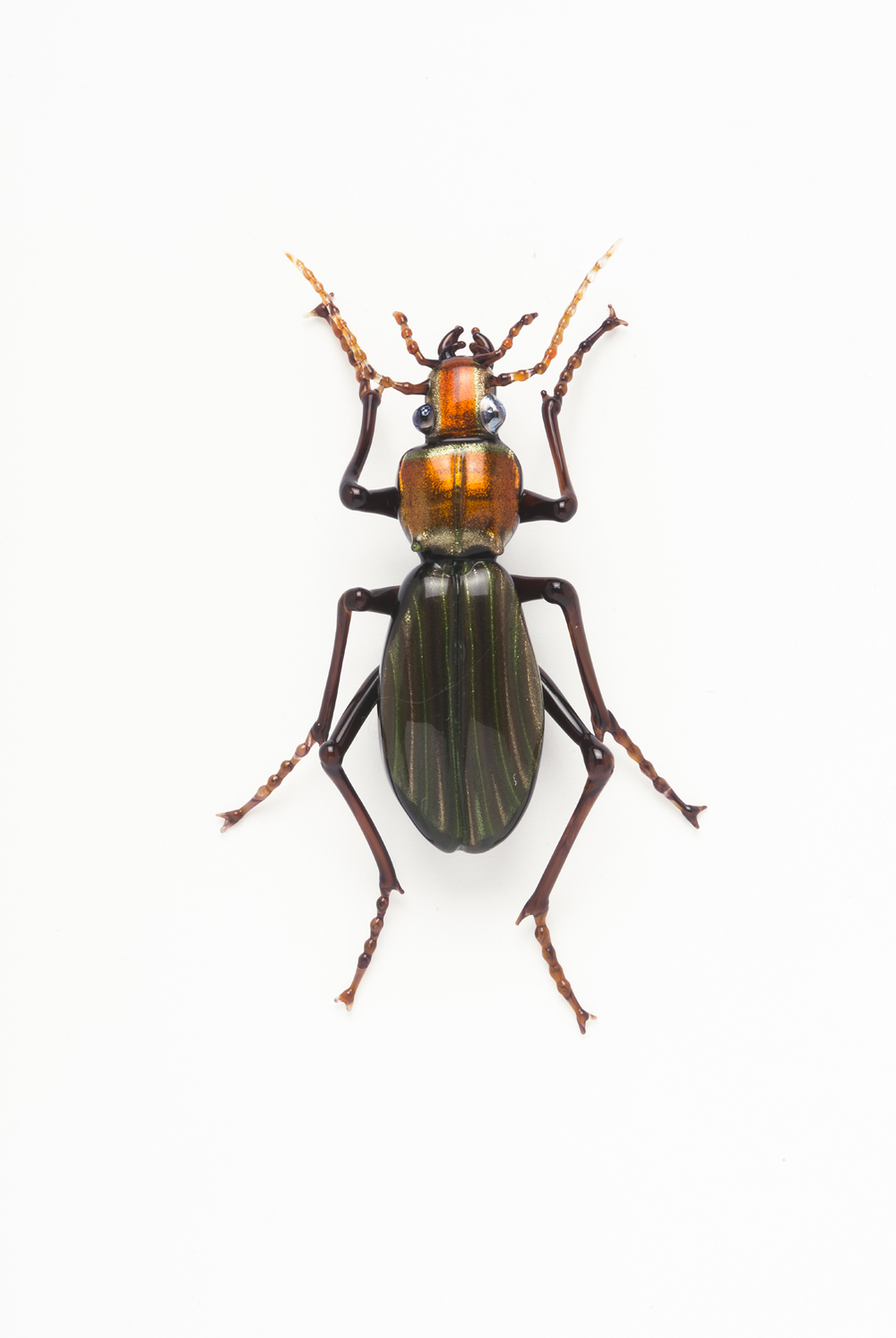 "Vittorio Costantini,  Family: Carabidae, ""Chrysocaabus Auronitens""  (2005, soda-lime glass, 2 3/4 x 1 3/4 x 1/2 inches), VC.6"