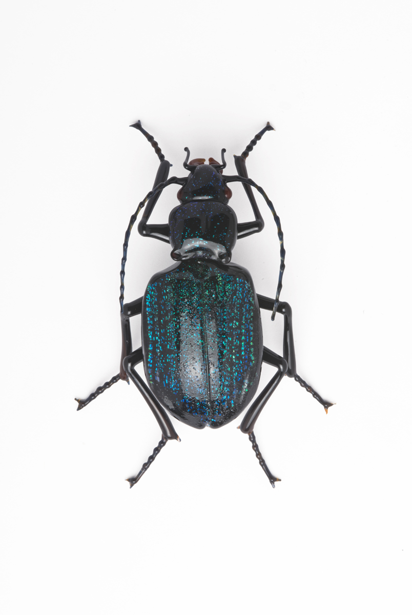 Vittorio Costantini,  Carabidae  (2009, soda-lime glass, 2 1/2 inches), VC.178