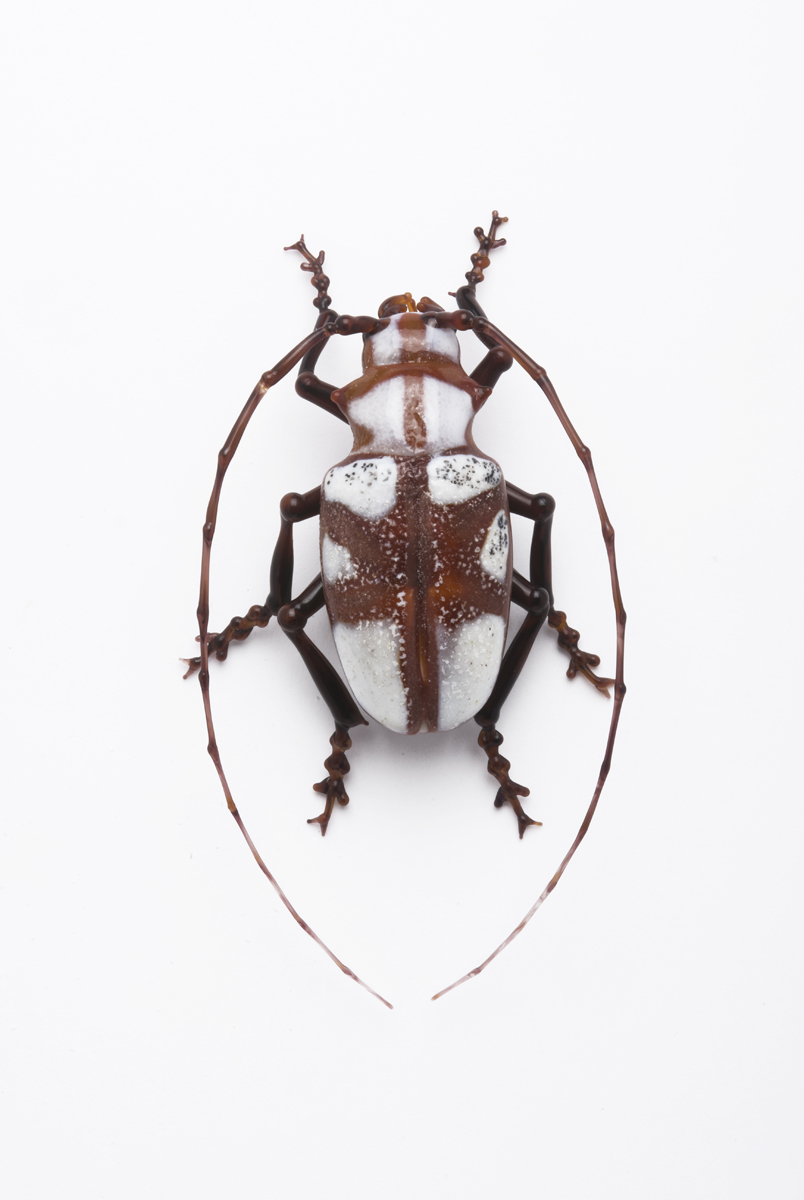Vittorio Costantini,  Cerambycidae (Africa)  (2009, soda-lime glass, 2 13/16 inches), VC.197