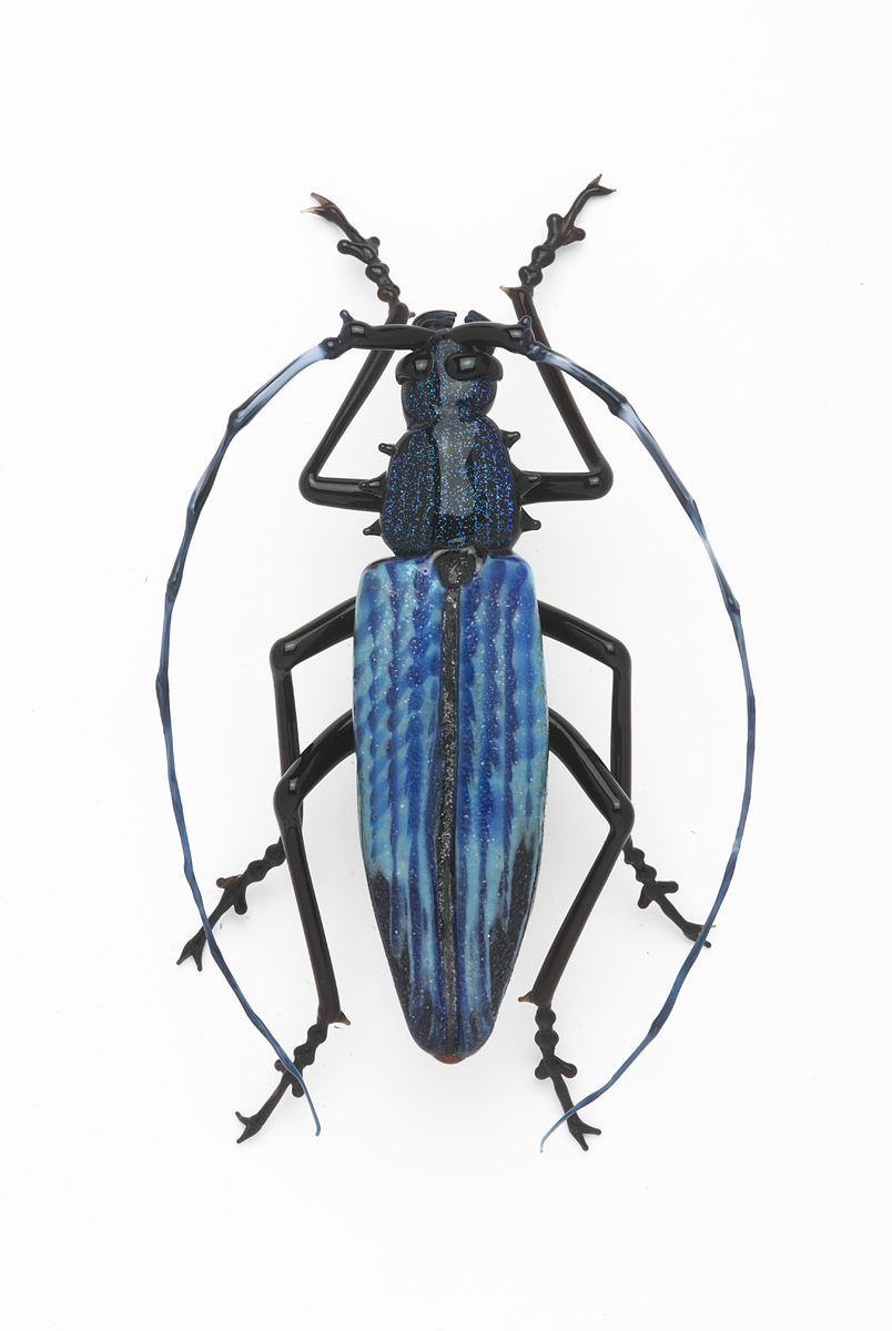 Vittorio Costantini,  Cerambycidae  (2009, soda-lime glass, 3 1/8 inches), VC.202