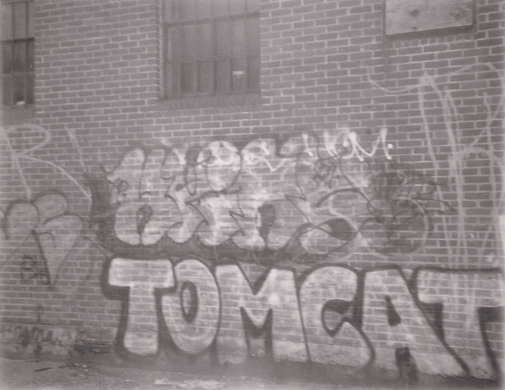 Tomcat cropped.jpg
