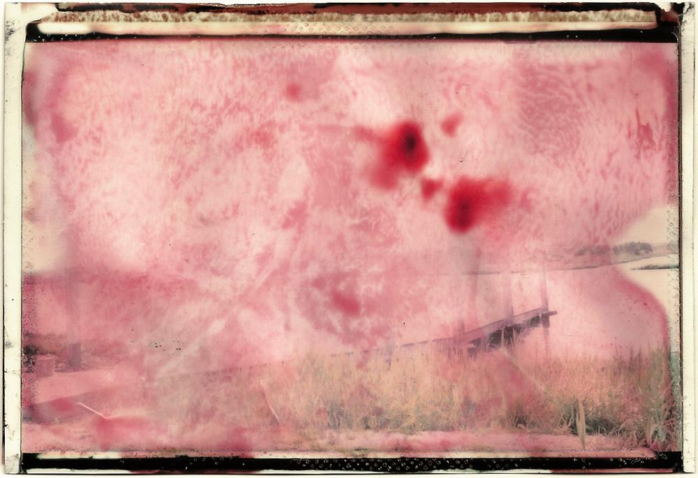 Pink Marsh.jpg