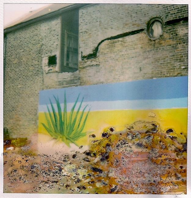aloe mural.jpg