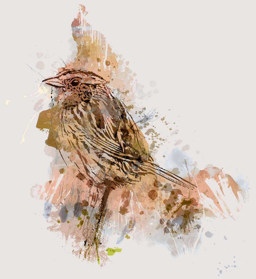 Moineau  |  The Painted Sparrow