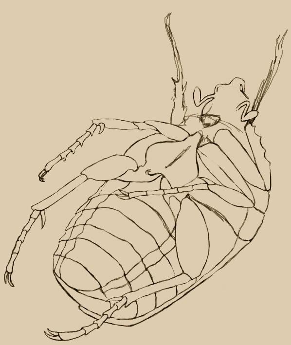 bug15.jpg